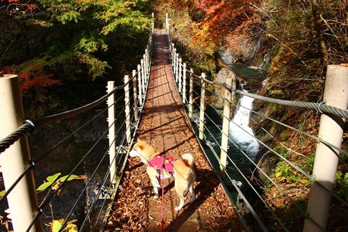 吊り橋コースへ29