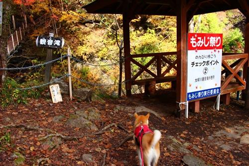 吊り橋コースへ32