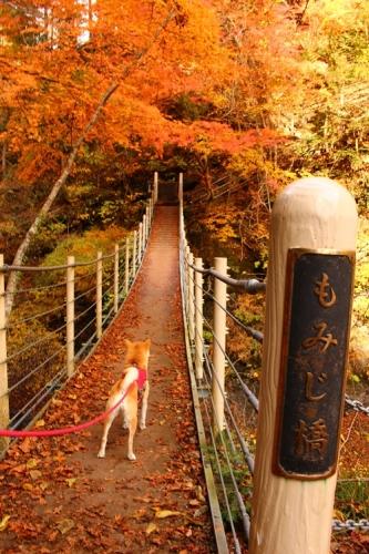 吊り橋コースへ34
