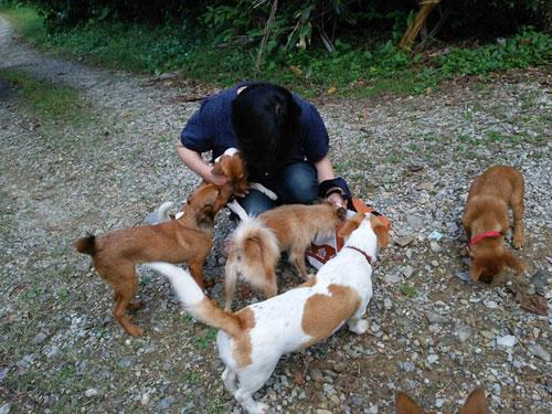 愛犬物語 七つ子 多頭飼