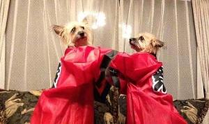 愛犬物語 ハロウィーン仮装犬