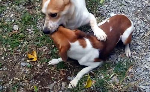 犬の親子 愛犬サンゴ 愛