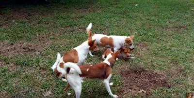 犬の親子3