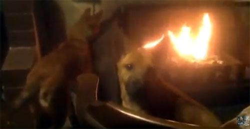 寒がりの犬 愛犬物語