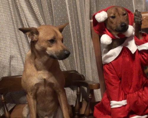 犬の服 愛犬サムとミク
