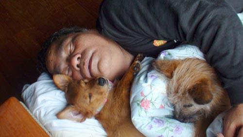 愛犬物語 サンバ
