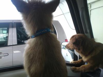 愛犬物語 犬のしつけ
