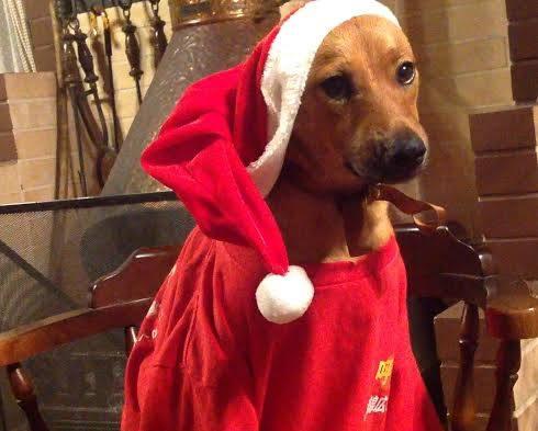 犬のクリスマス