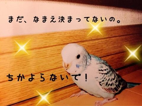 ぱちゃんお迎え2