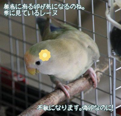 紙で巣作り3