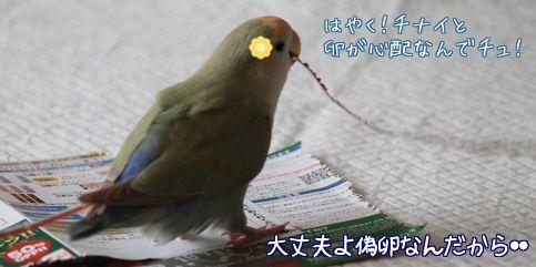 紙で巣作り5