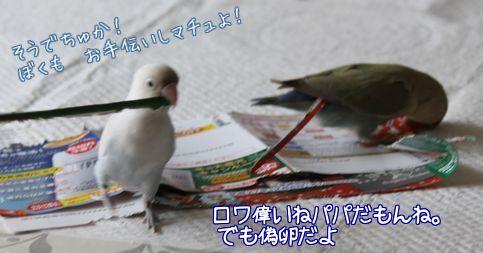 紙で巣作り6