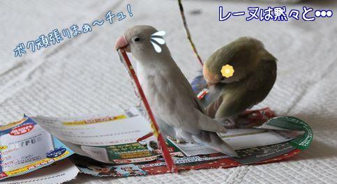 紙で巣作り7