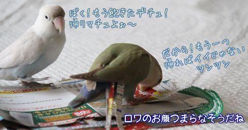 紙で巣作り10