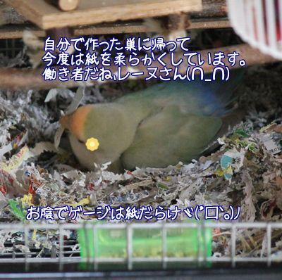 紙で巣作り11