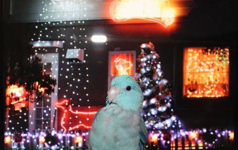 アオ君のクリスマス5