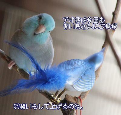 青い鳥さんが好き