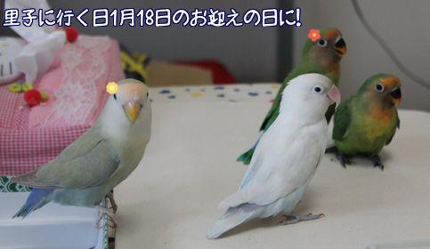 ちい・ココの誕生日2