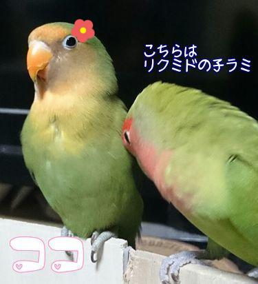 ちい・ココの誕生日3