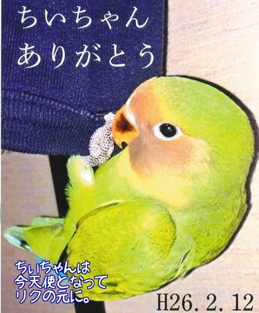 ちい・ココの誕生日5