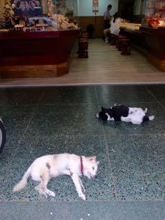 高雄 お昼寝犬 - 1