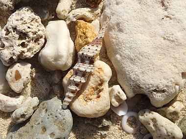 ハシナガミノボラ01