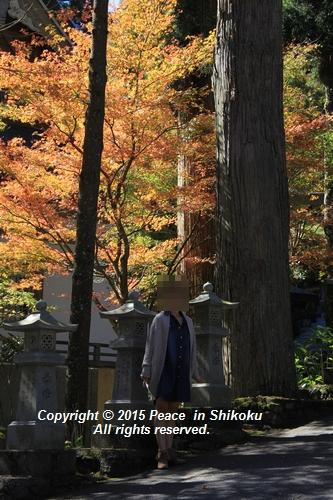 kouyou-1026-8444.jpg
