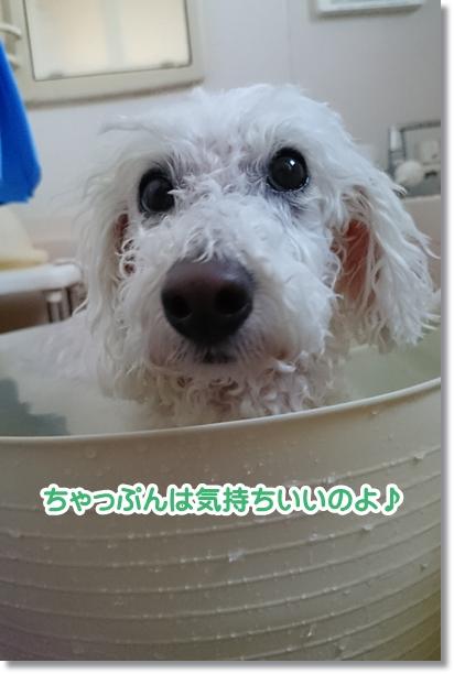 お風呂好き1