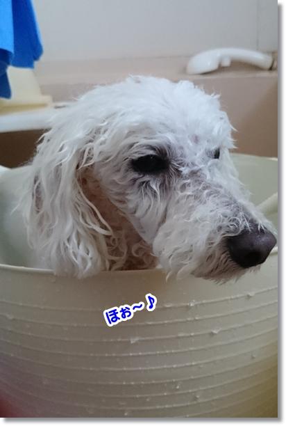 お風呂好き2