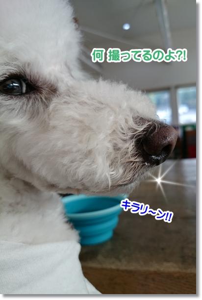 キラリ~ン2