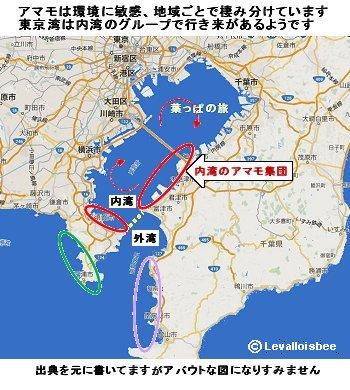 東京湾のアマモ