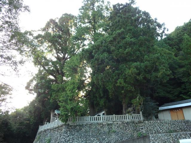 鎮守のお宮にスギ巨樹林がある
