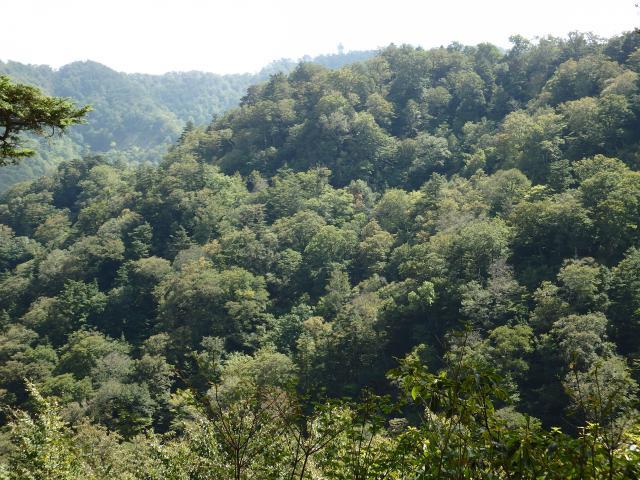 ファガスの森の周辺のブナ原生林