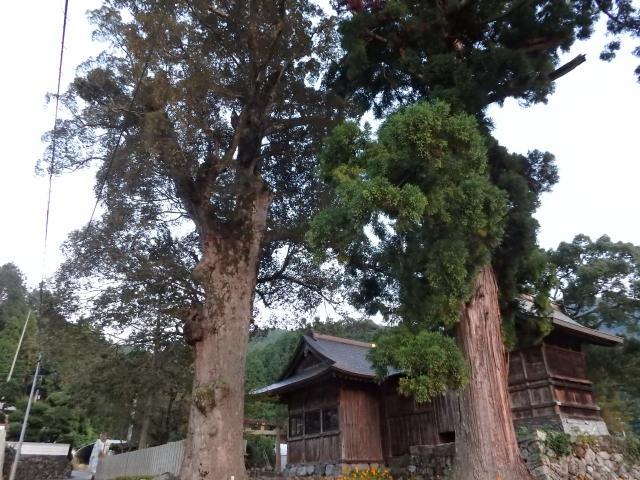 本上角八幡神社の巨樹たち