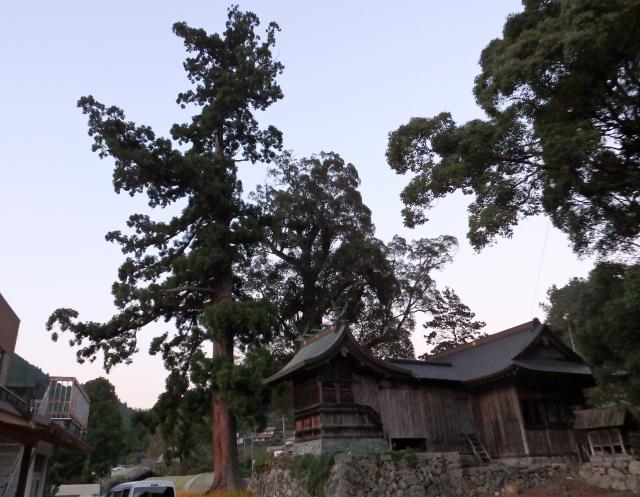 巨樹の周囲は開けている