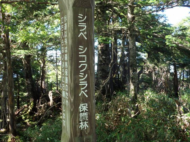 保護林となっている