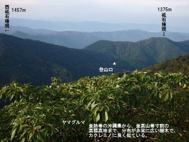 高城山山頂からブナ原生林を眺める