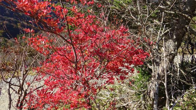 燃えるような紅葉だ。何の木? なんて聞くのはヤボかも。