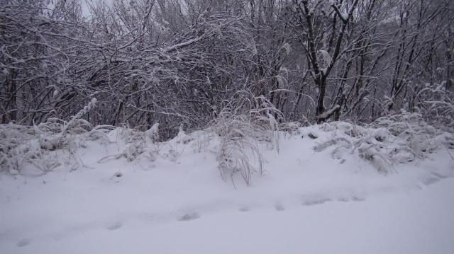 しっかりと積もるが積雪は多くはない
