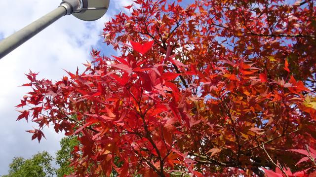 高松自動車道 鳴門西パーキングエリアの紅葉