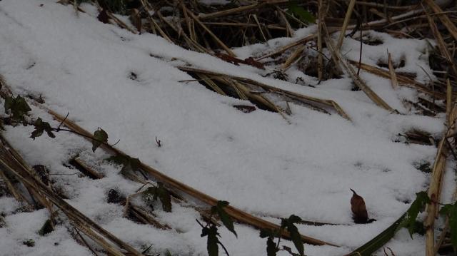 朝に恐らく2~3センチの積雪か?