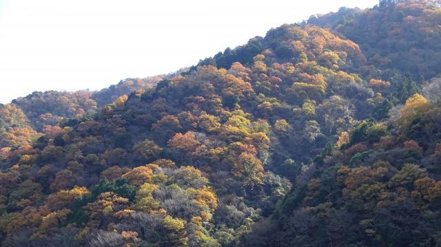 錦秋の島山