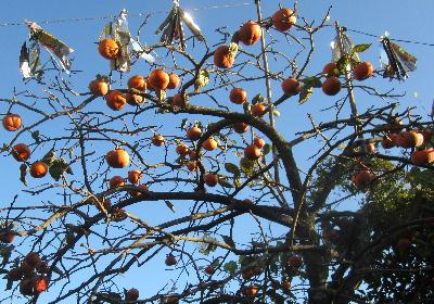 菜園の果樹 (1)