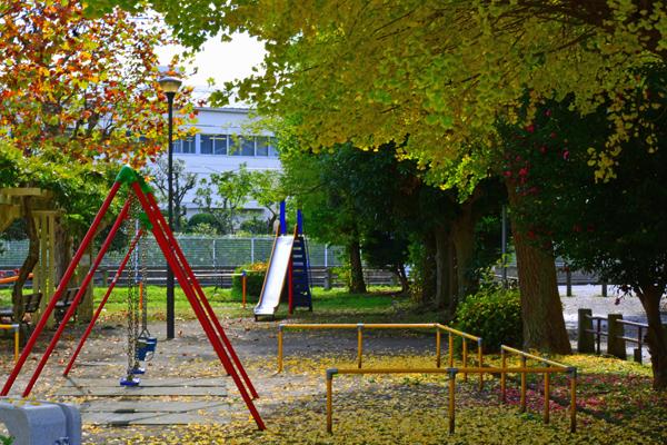 公園のイチョウ