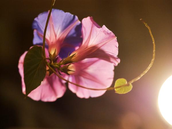 花が咲く2