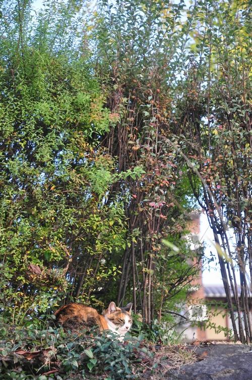 茂みに三毛猫