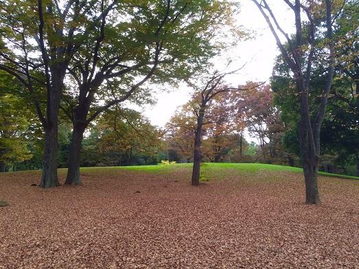 代々木公園落ち葉の絨毯