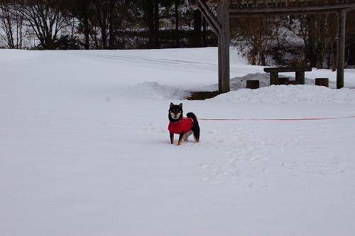 雪遊び (16)