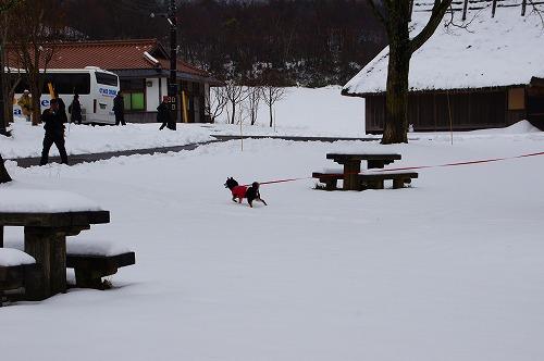雪遊び (20)