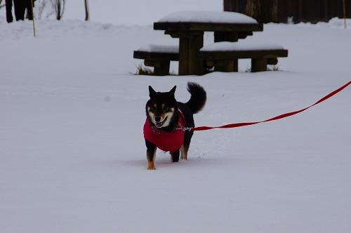 雪遊び (21)